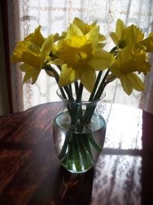 yellow-flowers-0042