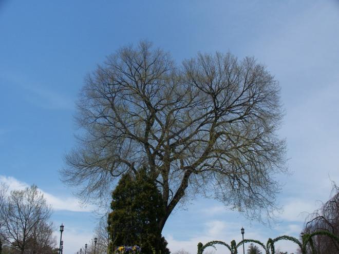 longwood-april-2009-032