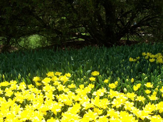 longwood-april-2009-065