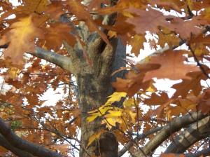 autumn 003